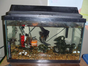 10 Gal Fish Tank with 5 Healthy Angel Fish