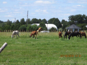 Horses for Lease