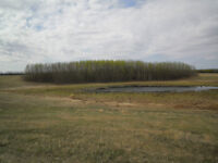 160 Acres - RM of Meadow Lake