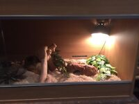 Vivarium and set up kit - used but good condition