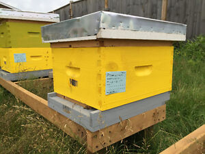 Production Ready Bee Hives for Sale
