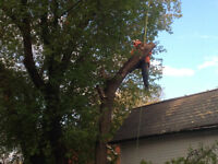 Insured Tree Removal / Pruning 15 yr exp tree climber.Time lapse