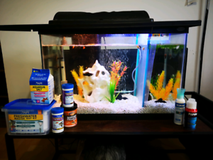 20 Gallon Fish Tank / Aquarium with everything you need included