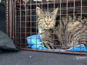Cat found in Riverbank Dr/Fairview Dr/Fountain St area