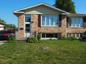 Rooms for rent near Lambton College -  avail. May 1