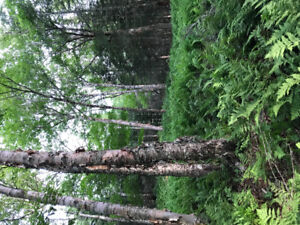 Land for sale 111 acres