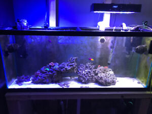 Aquarium 55 gallons reef