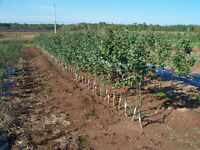 Fruit trees and Decorative Crab apple Trees for sale