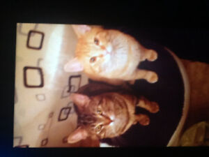 My furry friends need a new home ASAP