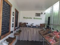 Fresh, Local & Inexpensive Produce for Sale