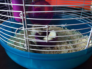 2baby hamsters cage food etc
