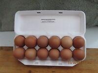 BROWN EGGS /FREE RANGE /FARM FRESH