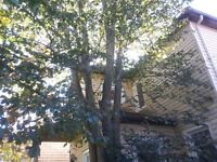 Safe Tree Removal - Pruning - Fall Specials