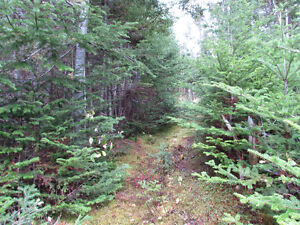 82-94 RIDGE ROAD, CHAPEL'S COVE..2 ACRES St. John's Newfoundland image 2