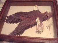 aigle eagle