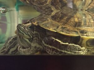 Reptile downsizing need gone asap!