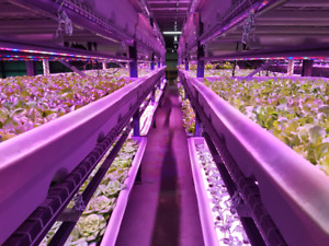 Vertical Farming Franchise