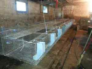 Rabbit wire cages, nestboxes,feeders Kingston Kingston Area image 3