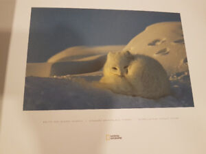 National geographic set of prints.