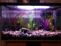 55 gallon fish tank/aquarium 250 OBO