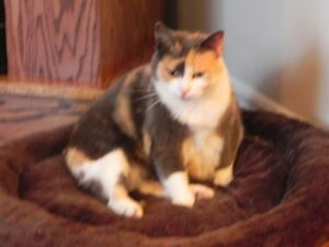 Looking for a home for Mature Gentle Cat