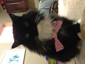 Friendly adult cat to be rehomed