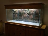 140cm Aqua oak aquarium. Solid oak hood.2x external filters 2x heaters light unit and tube