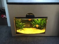 Fish tank for sale with fish 40cm long bow front