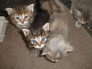 Adorable Kittens For A Good Home