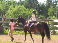 Wanted: Fredericton Pony Club needs a beginners pony!