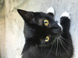 Special Cat needing a new home