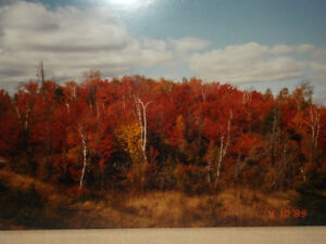 ABSOLUTELY BEAUTIFUL FALL SCENERY PICTURE $14.00