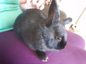 Free 4 Month Old Male Rabbit