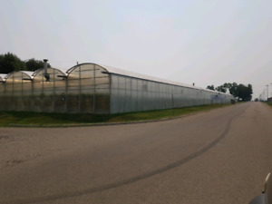 Greenhouse 102 8th street NW Redcliff