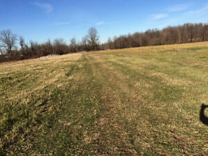 Looking for land to rent for pasture or crops