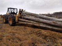 Déboisement  Achat coupe de bois