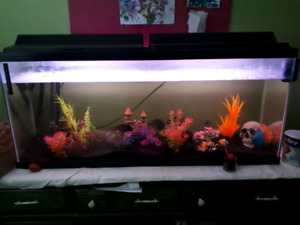 For sale: adult cichlids, baby cichlids, and 60 gallon tank