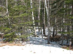Superbe terrain au bord de la rivière Saguenay Saguenay-Lac-Saint-Jean image 4