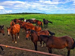 Equine Retirement & Boarding