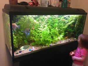 55 gallon Aquarium and accessories