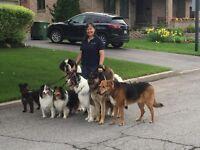 Maître-chien,Obéissance,Comportement/MasterDog Trainer,Obedience