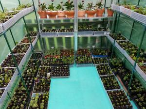 greenhouse | Garden | Gumtree Australia Free Local Classifieds