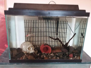 1little gold fish (food and stuff ) plus 20 gallon tank clean