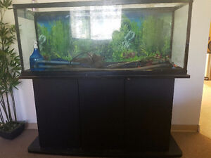 55g fishtank and stand