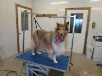 DOG GROOMING & BOARDING--STRATHROY AREA