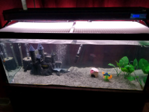 55 gallon Fish tank with Stand & Canister filter