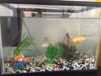 Fish Tank, pump, light and 1 goldfish and 2 fancy fish