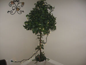 DECORATIVE TREE Stratford Kitchener Area image 3