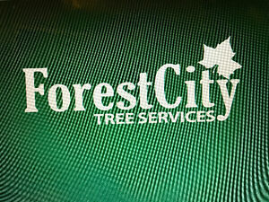 Forest City Tree Services - Winter Sale 20% off Kitchener / Waterloo Kitchener Area image 1