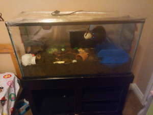 Hermit crabs, tank and stand